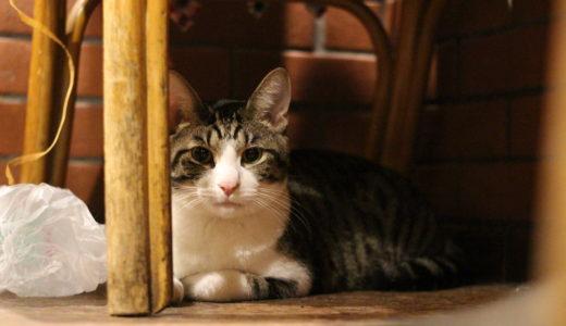 またまた東京・江古田の猫居酒屋 赤茄子へ行ってみた