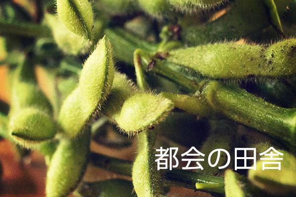 東京23区内やけど野菜の直売所が存在するで